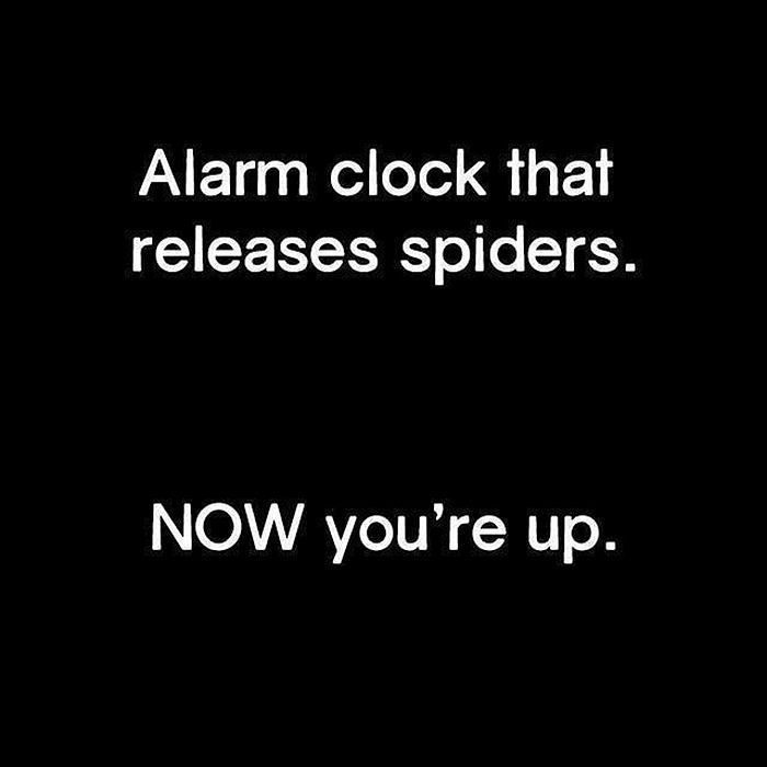 Are you up yet ?    http://Analog.OnlineClock.net  #WakeUp #GoodMorning #Mornings #Motivation #Alarm #AlarmClock #MorningMotivation #Alarms #Spider #Spiders #Animals #Motivational #Insects #Motivations #Morning #inspirationalquotes #inspiration