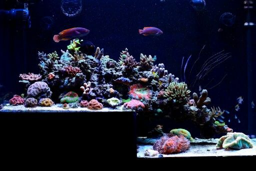 17 best images about fish tank dreams on pinterest fish for Dream of fish tank