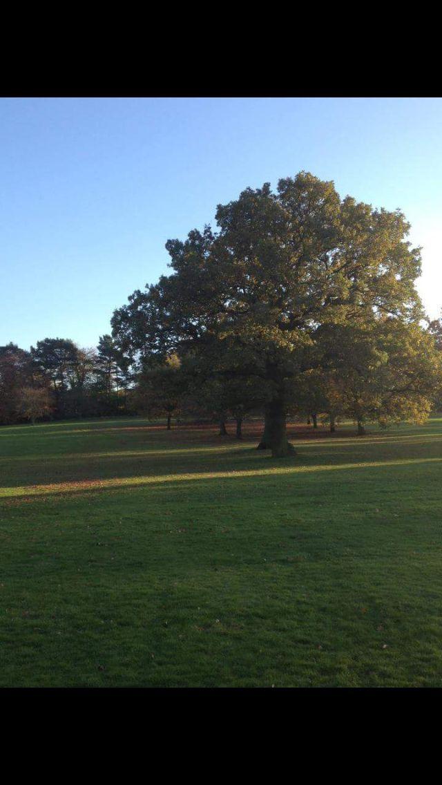 Kings norton park autumn 2012