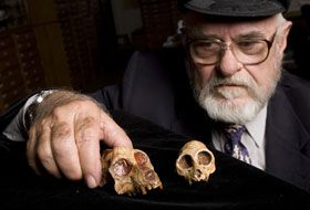 Brain, Size and Gender Surprises in Latest Fossil Tying Humans, Apes and Monkeys. Elwyn Simons of Duke with the 1966 male skull of Aegyptopithecus and a more recent female skull, showing sexual dimorphism. Photo by Megan Morr.