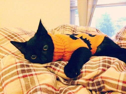 Sooty in a lovely Autumn sweater.