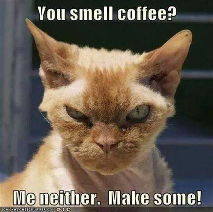 You smell cofee?