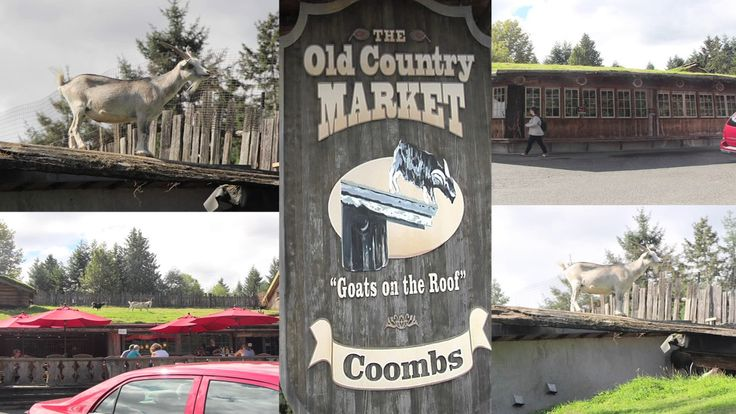 Barb & Ernie's Vancouver Video. Beautiful British Columbia part # 5. Van...