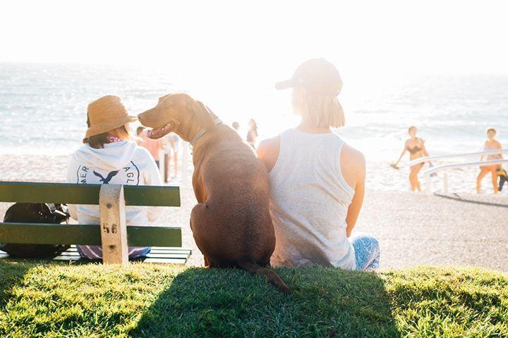 犬と人間をアクティブにする、ライフスタイル提案型コンセプトショップ「ドギー ブロ」オープン   犬と人間がアクティブに過ごす、そんなライフスタイルを提案するコンセプトショップ「ドギーブロ(DOGGY BRO)」が1月21日(土)、神奈川県茅ヶ崎にオープンする。            本ショップでは、「愛犬とのあるべき姿」「人間の5倍速で生きる犬への本気のモノ作り」「食事が健康を作る」の3つをコンセプトに、オリジナルウェアの販売のほか、キャンプ・ランニング・マリンアイテムの...