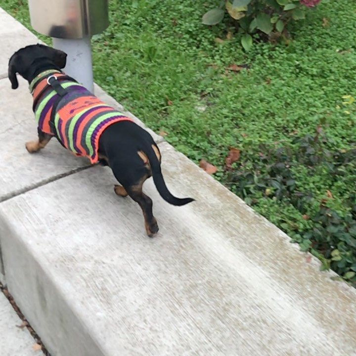 Just A Little Bootilicious Weinie Halloween Fun For Your