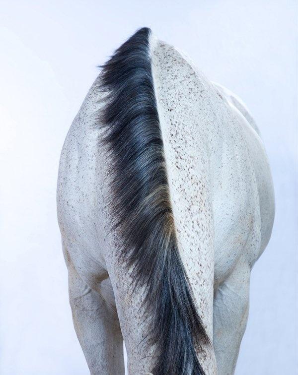 Beautiful Wild Horses Photos