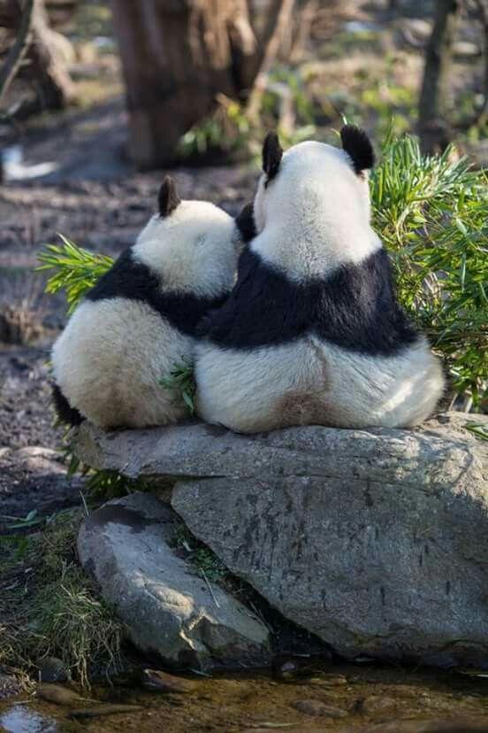 Pandaliefde♡