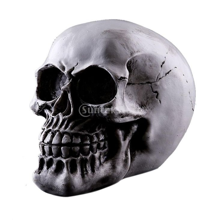 Хомосапиенс Череп Статуя Статуэтка Человеческий Скелет Головы Медицинской Скелет купить на AliExpress