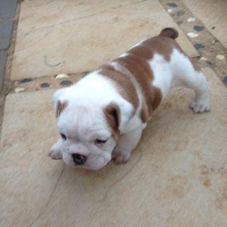 Coco at 4 weeks