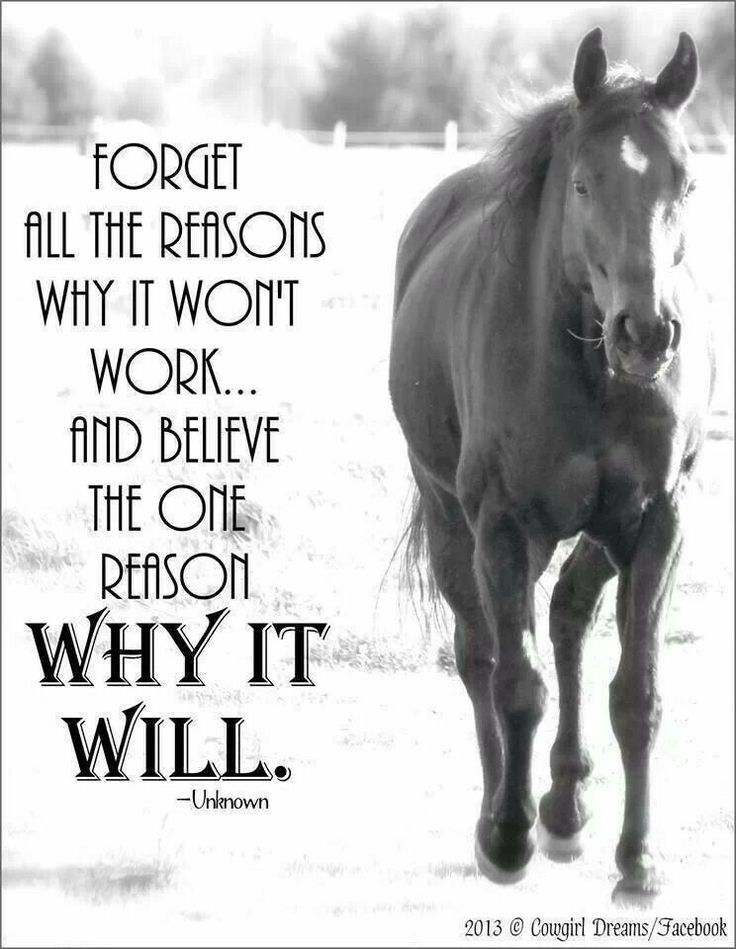 It's just a matter of believing. Believe in our horses and believe in us, the ones who can't live without a horse, because our passion, our strength, our love and those wings, the ones they share with us...