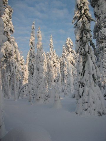 Finnish nature in the winter - Tykkymetsää, Salla.