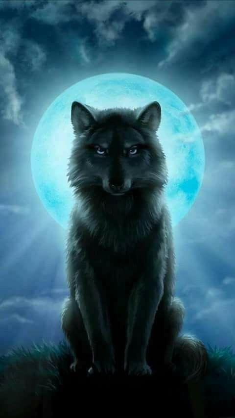 Beautiful wolf! ❤️❤️❤️❤️❤️❤️