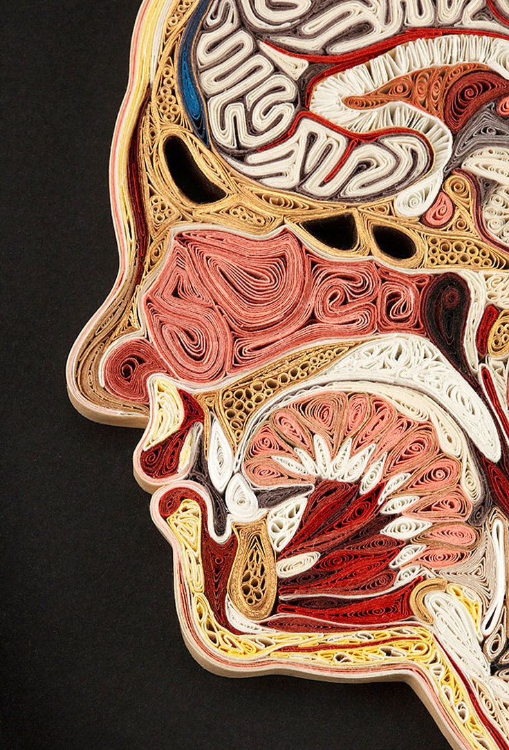 Paper artist Lisa Nilsson mimics the internal organs and bones that make up human and animal anatomy - all with tightly coiled bits of paper