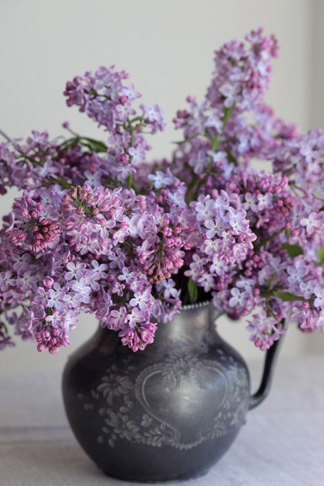 """""""Lilacs will forever be my favorite of all. You can almost smell them in this photo!""""   My lilac bushes hum with a thousand bees...! amf."""