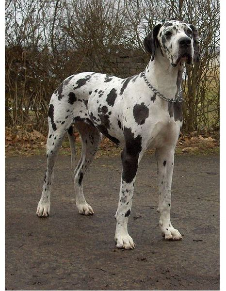 Dog Names For Spotted Dogs