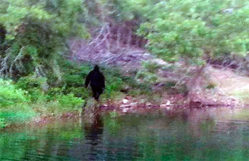 """Table Rock Lake Bigfoot: This alleged Sasquatch photo was taken by an unnamed man at Table Rock Lake near Kimberling City, Missouri on July 4, 2013. """"According to the story,"""" said Angelique Christensen, a member of the Paranormal Distraction investigation group, who got the pictures from the photographer, """"the man was out fishing in the coves with his family/friends and this is what they saw. Several people had witnessed it."""""""