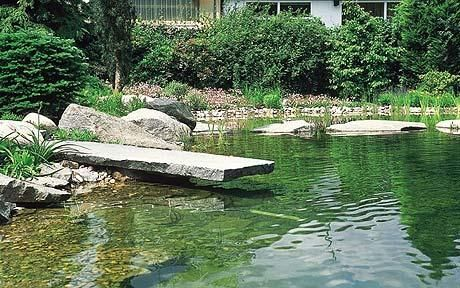 Pond or natural swimming pool?