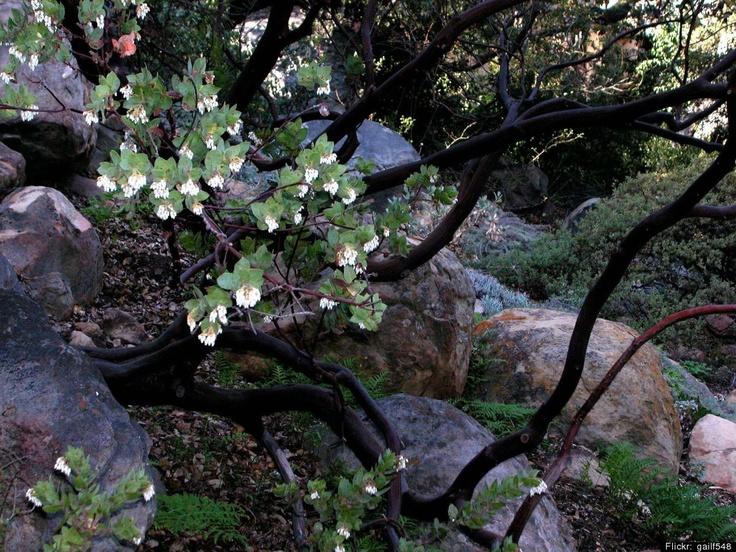 Best Botanical Gardens: 13 Stunning Arboretums Around The World