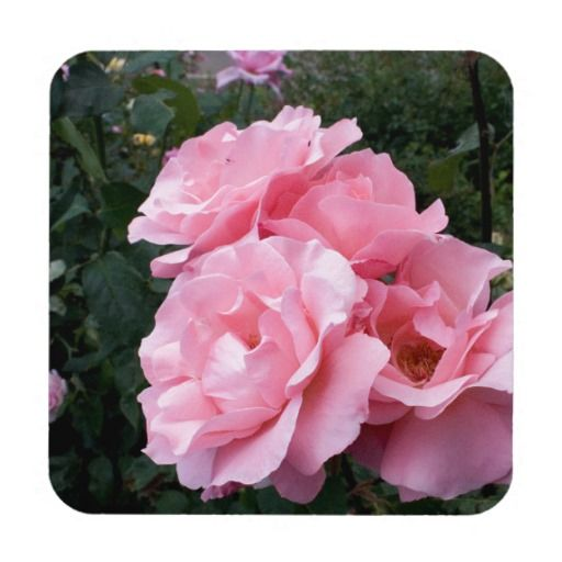Pink Roses #5b Coaster
