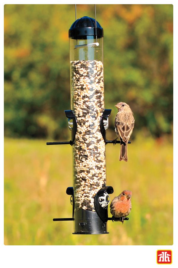 Attract all your favourite birds to your backyard this fall with a bird feeder.