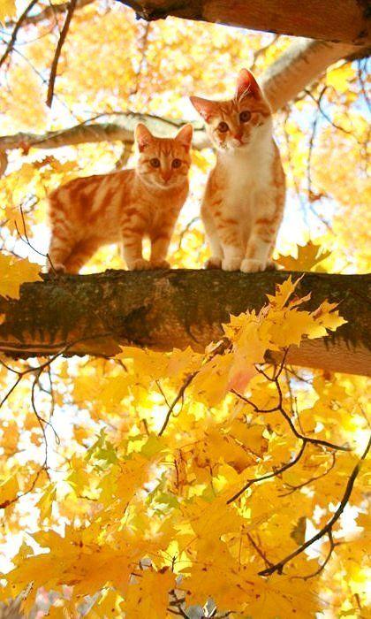 Cute orange tabby cats in autumn tree.
