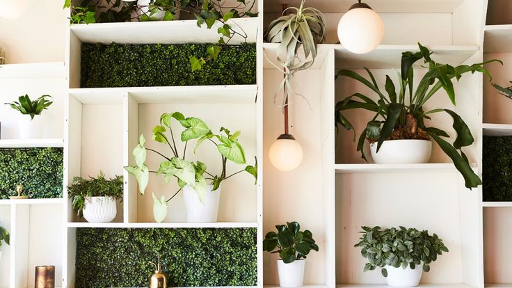 Our Guide to Keeping Indoor Plants Alive As Long As Possible: In attempt to turn our leafy green dreams into a reality, we turned to Adam Mallory and Davis Khounnoraj of cult Toronto floral boutique Crown Flora Studio, to give us the lay of the agricultural land, from the best plants, to the best pots, to what's on trend. Go forth and may your cacti forever prosper. | coveteur.com