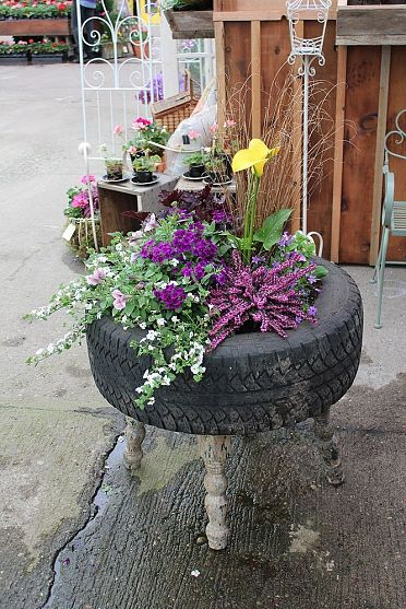 An old stool, old tire, just A touch of dirt and A green thumb and you have recycled beauty