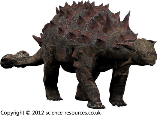 Euoplocephalus (Well-Armoured Head) Euoplocephalus was a large armoured plant-eating dinosaur of the late Cretaceous.