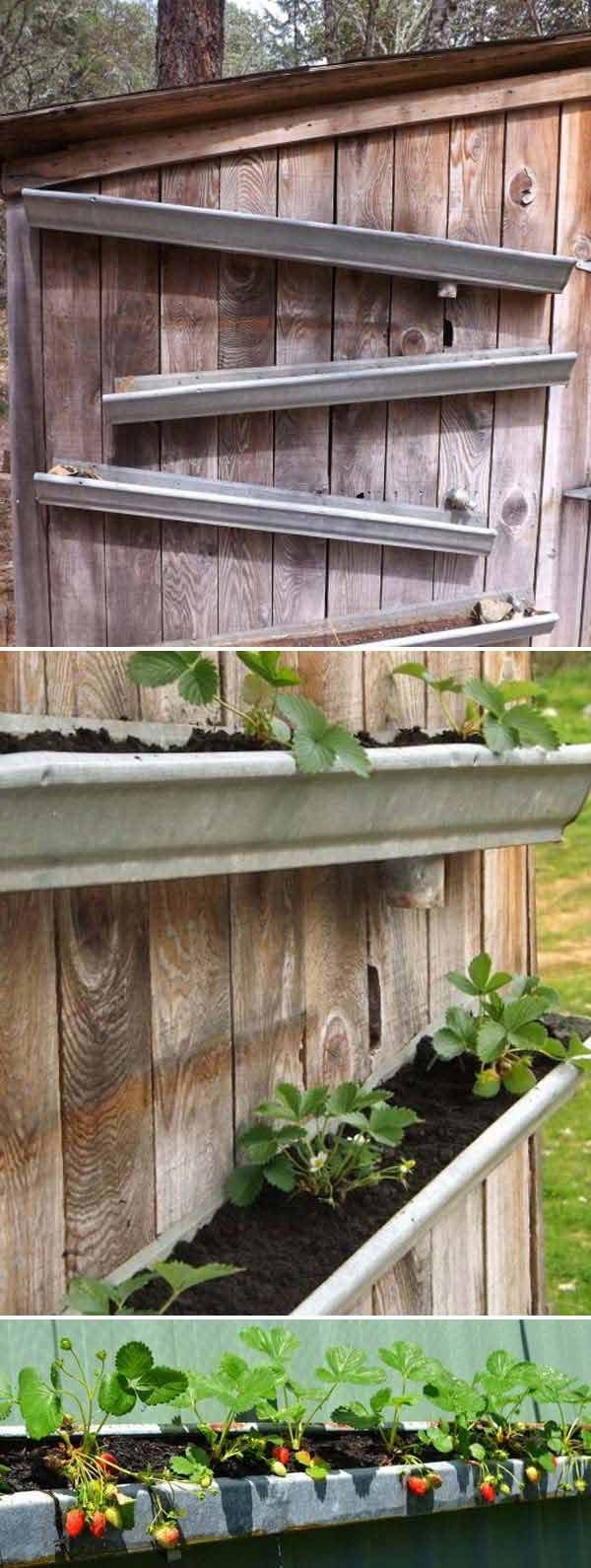 Build a strawberry garden in old rain gutters, they could be mounted on the side of a shed or garden fence.