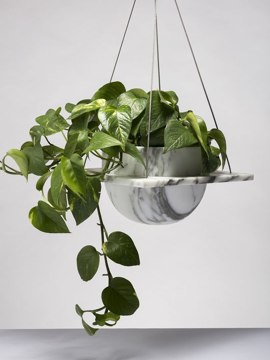Pothos plant (epipremnum aureum) - great for low-light and will trail beautifully - Devil's Ivy!