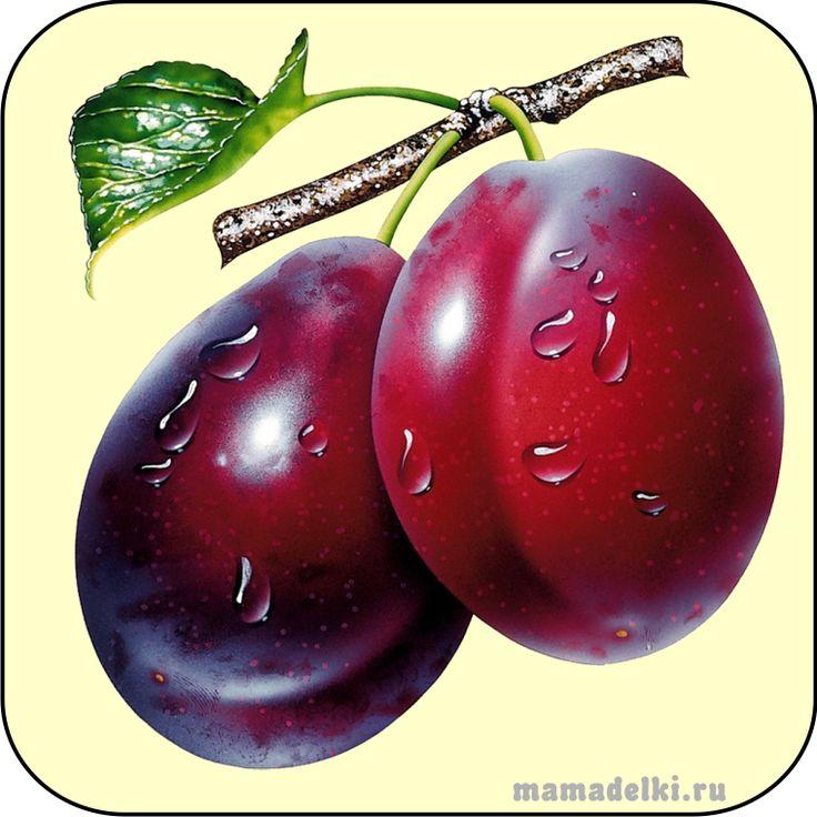 plum vector graphic