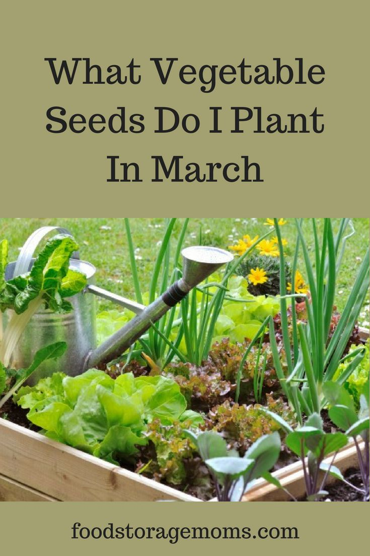 What Vegetable Seeds Do I Plant In March Vegetable Seed Organic