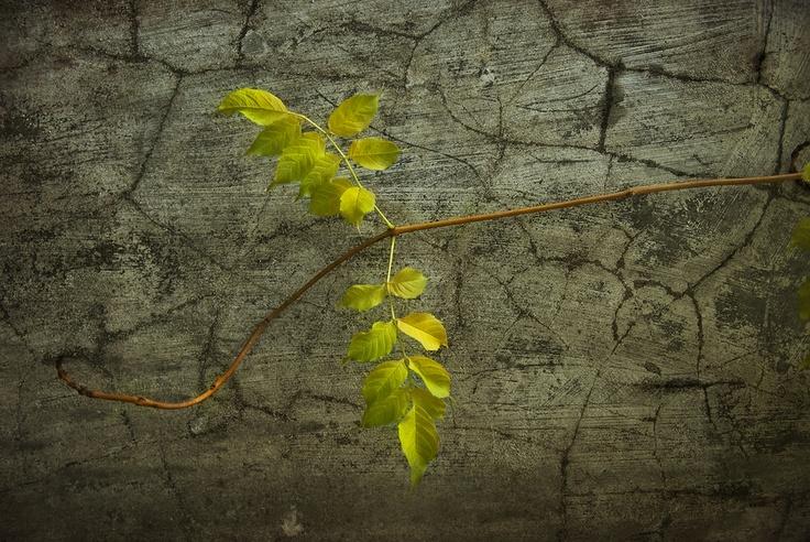 Seasonal Colors_17 by Pedro  Pinho, via 500px