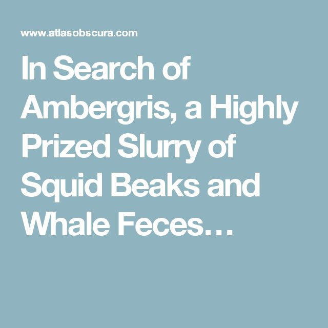 In Search of Ambergris, a Highly Prized Slurry of Squid Beaks and Whale Feces…