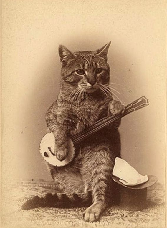 animals playing banjo - photo #16