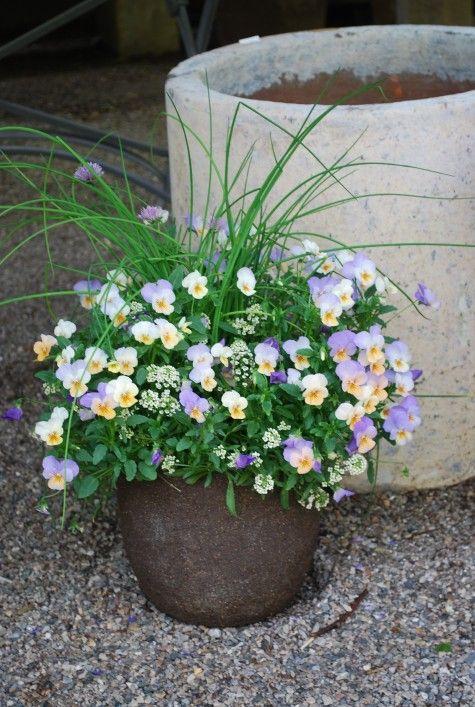 Lavender And Peach Violas. Prairie GardenGarden PotsGarden PlanningFlowers  GardenSpring FlowersGarden ProjectsGarden IdeasLandscape ...