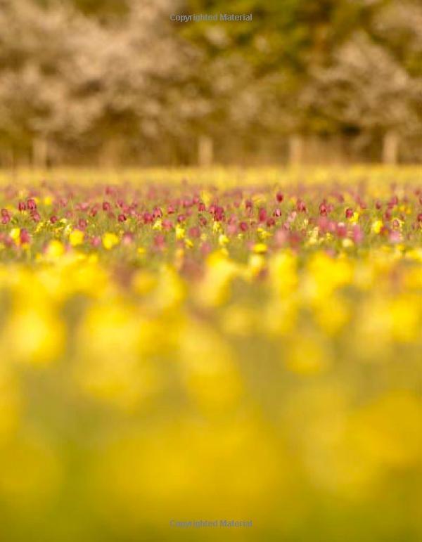 The Meadow: An English Meadow Through the Seasons: Amazon.co.uk: Barney Wilczak: Books
