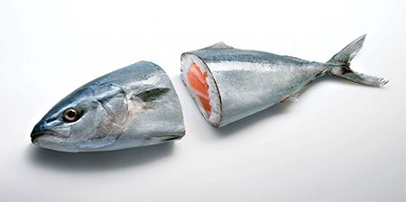 Really Fresh Sushi
