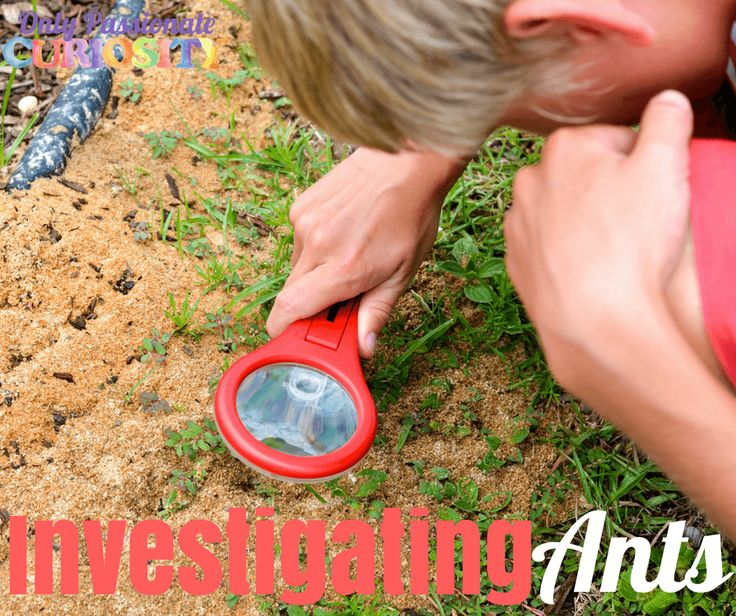 Investigating Ants – Only Passionate Curiosity