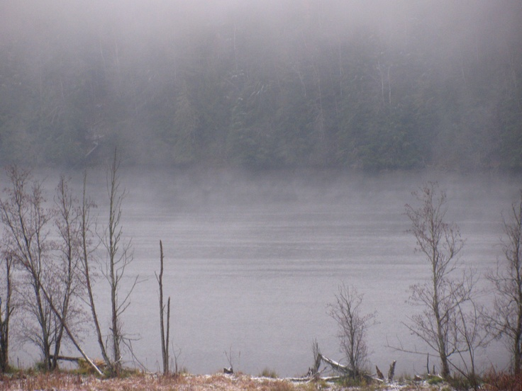 Seeing through the fog .... kinda looks like  Degobah ...