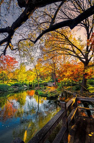 Autumn at Japanese Gardens Pond, Fort Worth Botanical Gardens - Fort Worth,