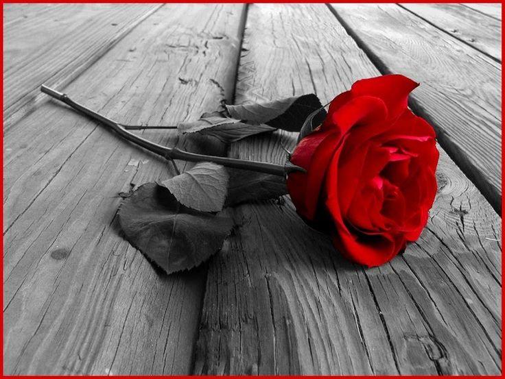 """Une rose sans épines c'est une passion sans piquant. Lorsque j'ai rencontré cette jeune femme bien piquante - Philippe-Aimé de Beauregard Libertin Paris (""""Mon Amant au Beau Regard"""")"""