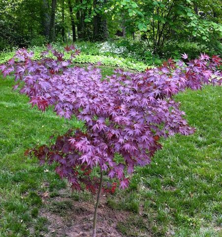 17 Best Images About For Planting Creeping Thyme On Pinterest Gardens Perennial Ground