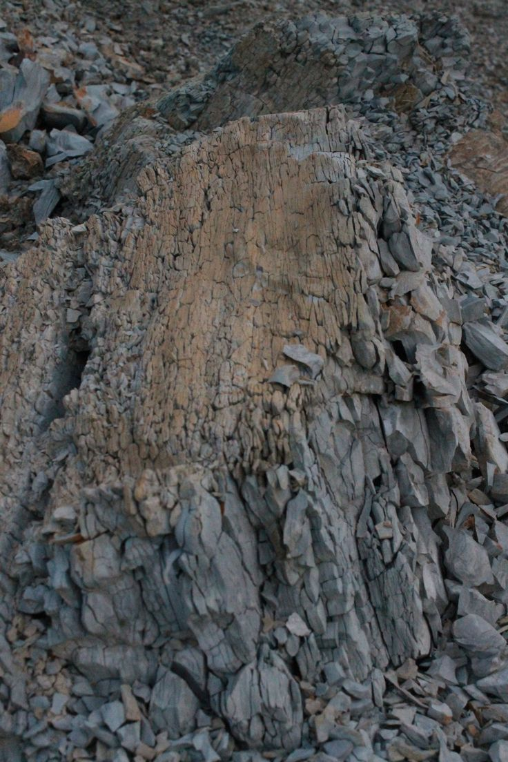 Sun warmed puzzle rock, wonderful textures
