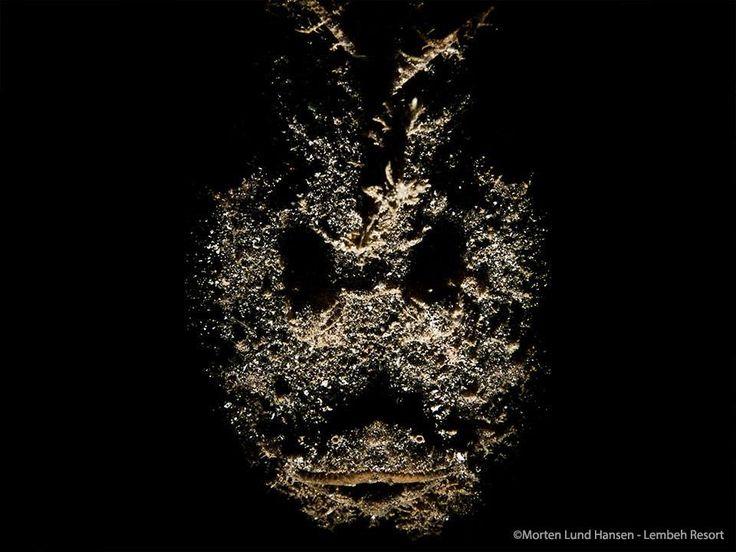 Phantom Velvetfish - Photo by Morten Lund Hansen #ThingsThatGoBumpIntheNight #Diving