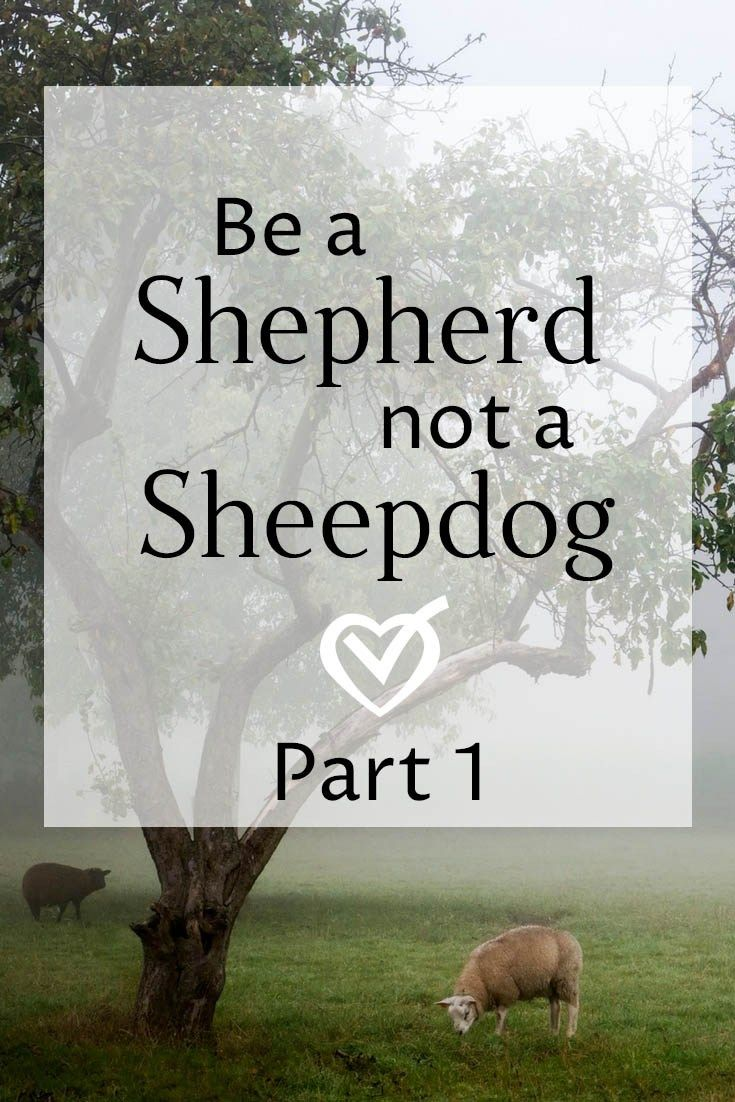The shepherd is calm and firm and confident. The sheepdog is jittery, harsh, and hostile. How will you lead your homeschool?
