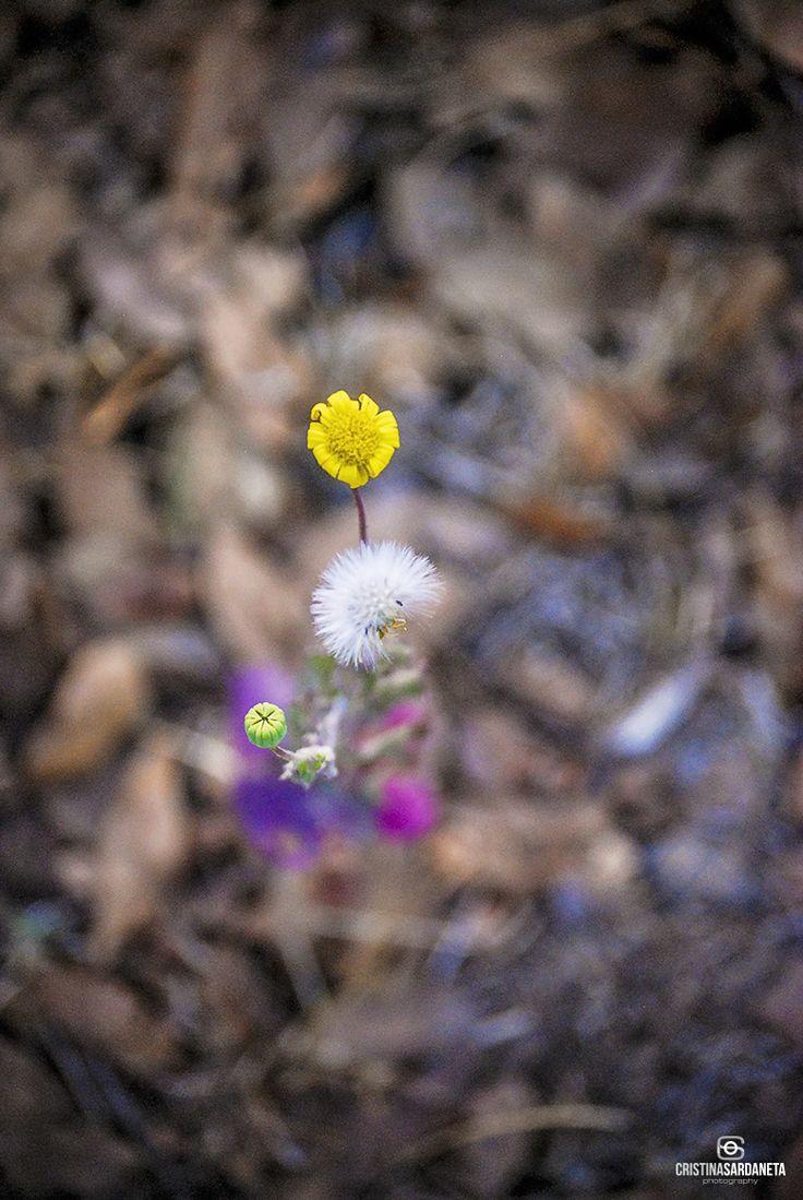 Las flores aparecen en los lugares mas inesperados.