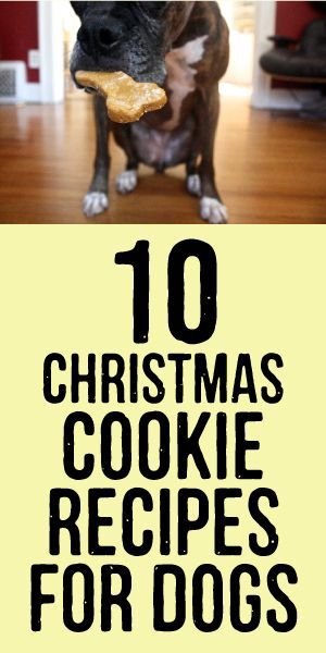 10 Christmas Cookie Recipes for Dogs #DogChristmas