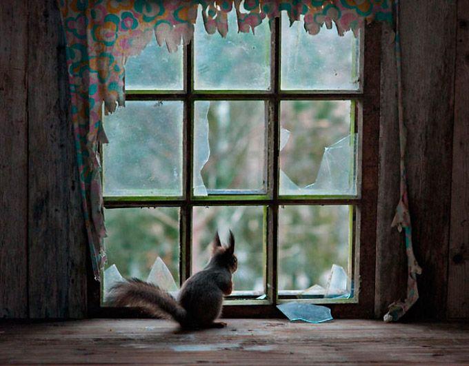 O filandês Kai Fagerstroem percebeu que raposas e gambás haviam se tornado seus novos vizinhos em sua casa de veraneio em Soumusjarvi. Mais ...
