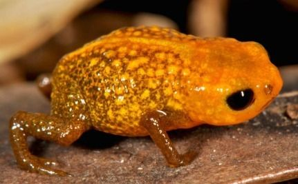 7 Teensy New Frog Species Discovered in Brazil's Cloud Forests